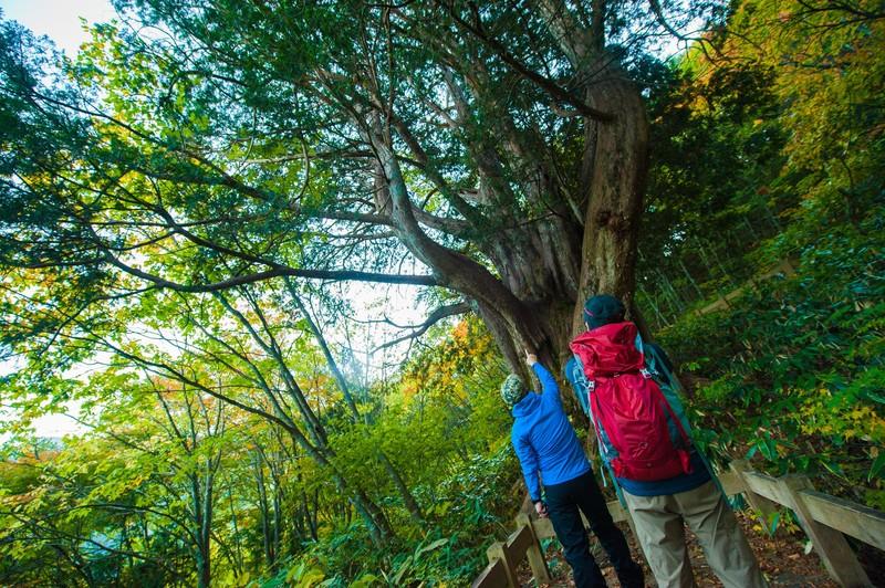 週末の森歩きイメージ