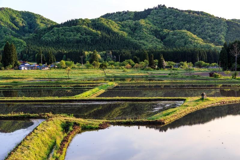 田舎と自然と田んぼ