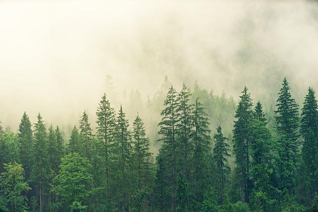 天然、自然イメージ