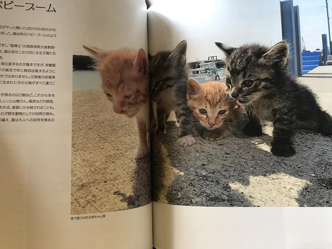 「猫島ありのまま」の写真2