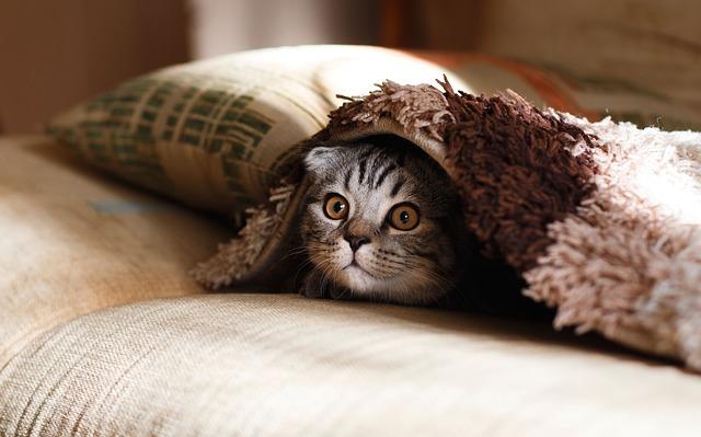 暖かい毛布