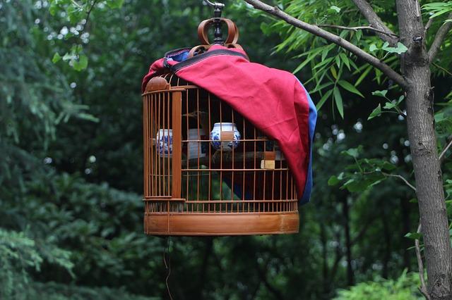 鳥かご「バード・ボックス」